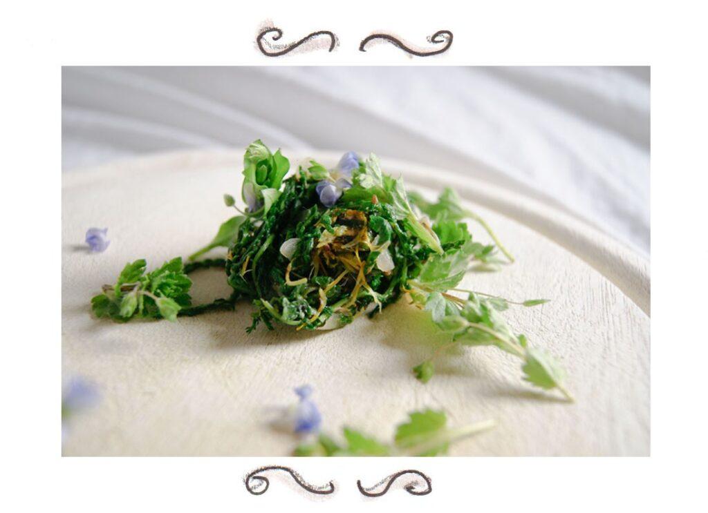 Wild herbs yarrow dandelion speedwell